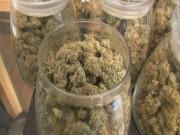Florida Medical Cannabis 00000007
