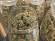Marijuana Rules, Finally