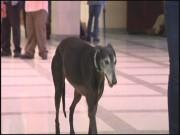 Greyhound Guarantee 00000002