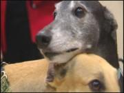 Greyhound Guarantee 00000003