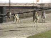 Greyhound Guarantee 00000004