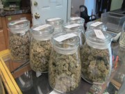 Pot Questions for the Surgeon General 00000005