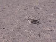 Bird Nesting00000005