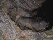 Bear Hunt Meeting00000003