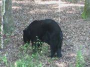 bear-wise-00000005
